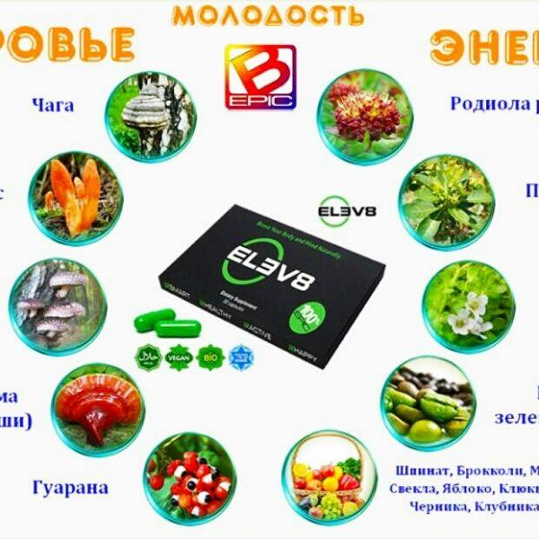 elev8_sostav
